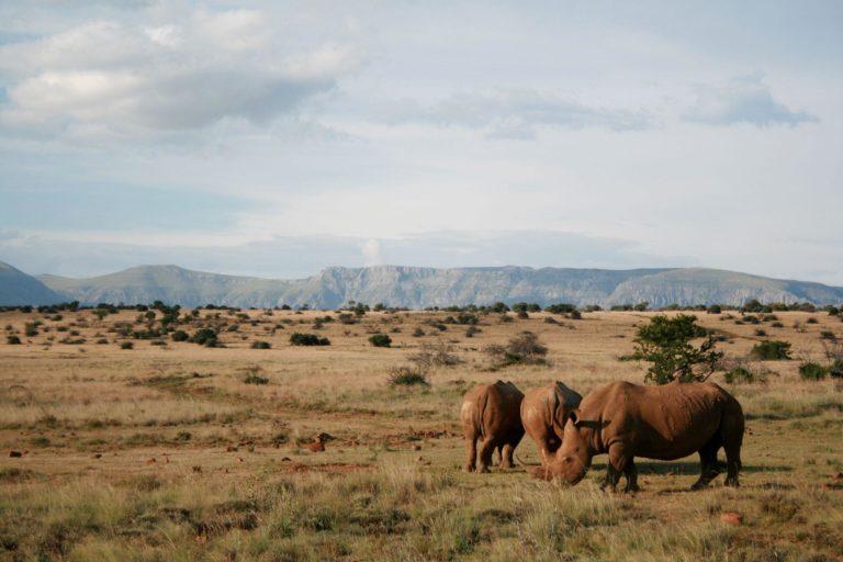 Camdeboo Game Reserve