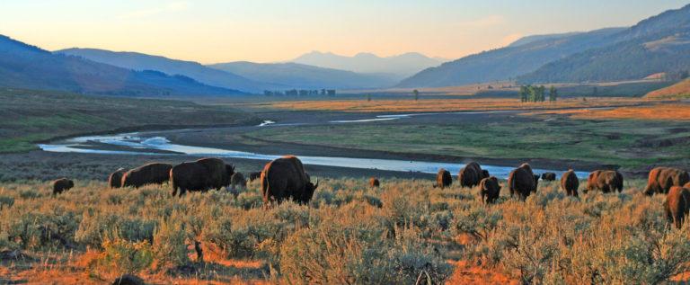 Adobe Stock Yellowstone